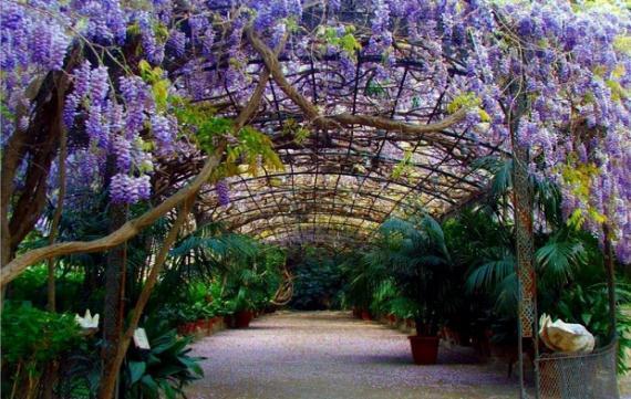 Plantas trepadoras caracter sticas generales for Adornos para parques y jardines
