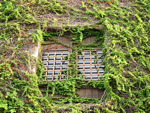 Plantas trepadoras, características generales  Tendenziascom