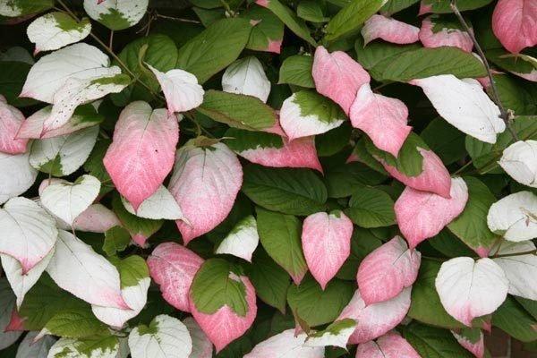 Plantas trepadoras caracter sticas generales - Tipos de plantas de exterior ...