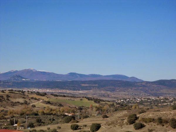 Bosque mediterr neo fauna y vegetaci n for Clima mediterraneo de interior