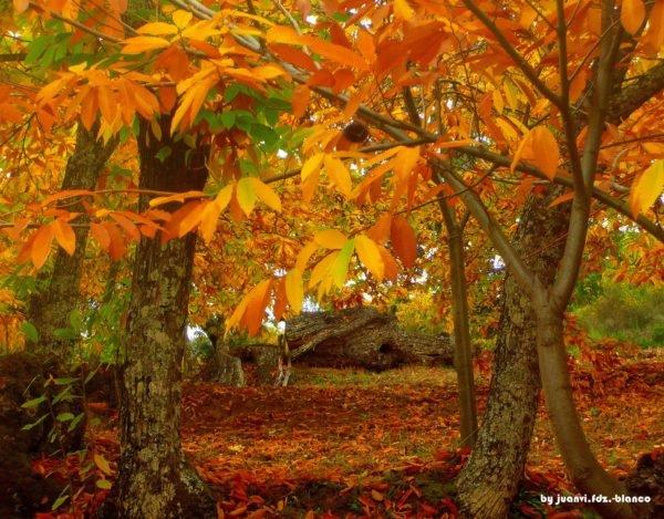 bosque-mediterraneo-flora-castaño