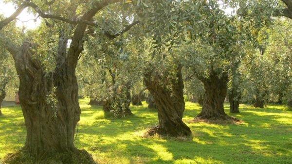 Resultado de imagen para bosques mediterraneo