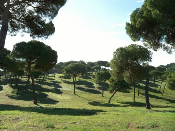 bosque-mediterraneo-flora-pinos