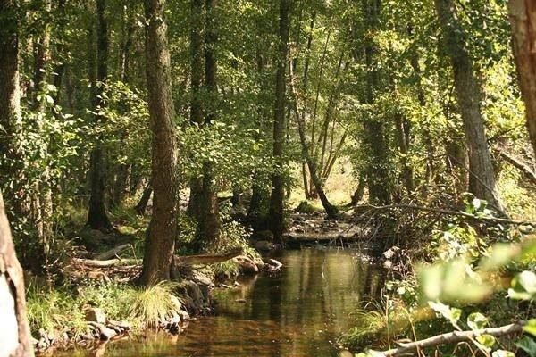 bosque-mediterraneo-flora-robles