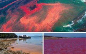 ¿Qué es la marea roja?