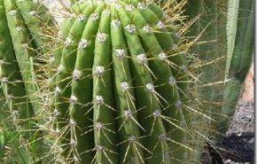 Tipos de plantas   Cactus