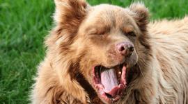 Los perros se contagian el bostezo de nosotros
