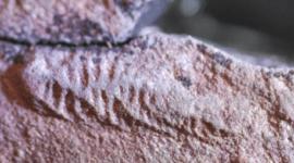 "Canal en Marte revela ""reciente"" mega inundación"