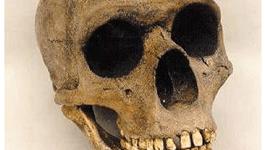 Los neandertales utilizaban plantas medicinales