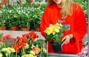 Abonar plantas de interior