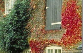 Tipos de plantas | tapizantes y trepadoras