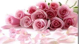 Los colores de las rosas | Rosas rosadas