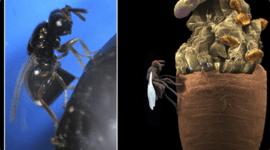Traje de Hombre Araña para trepar por las paredes