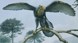 Evolución del vuelo de las aves