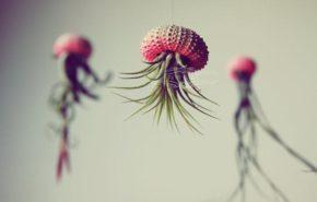 Plantas azules colgantes como medusas marinas