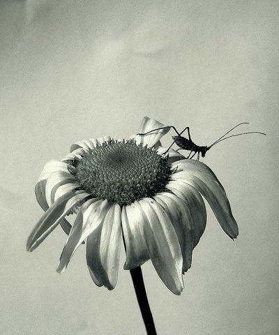 Las plantas también enferman