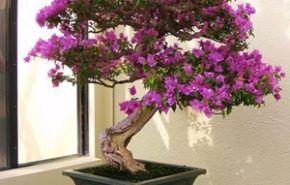 Siembra y cuidado de las Begonias