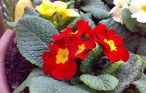 Plantas de fácil mantención