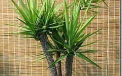 Tipos de plantas | plantas de interior