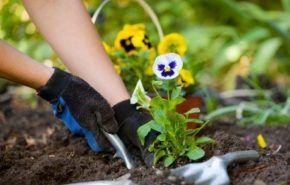 Consejos de Jardinería para Principiantes
