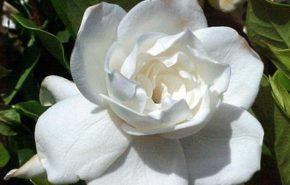 4 flores que simbolizan amor y belleza