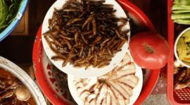 ¿Por qué no comemos insectos?
