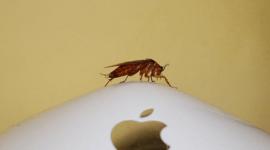 Cucarachas europeas que evolucionaron para evitar las trampas