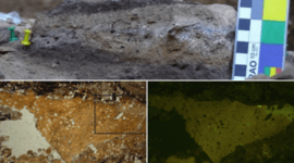 Los neandertales comían sus vegetales