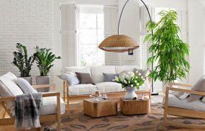 Cuidar las plantas de interior