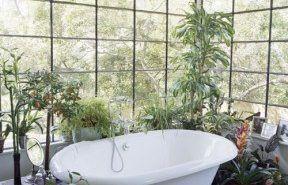 Plantas para decorar el baño