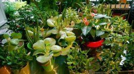 Fotos de plantas de interior