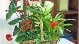 Escoger plantas de Interior | apariencia