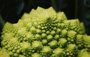 Cultivo de brócoli