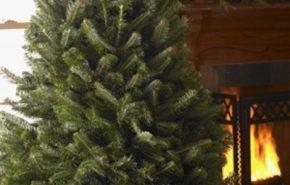 Cómo cuidar el arbol de navidad natural