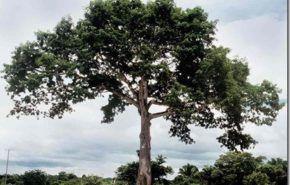 Caracteristicas de los arboles | crecimiento y longevidad