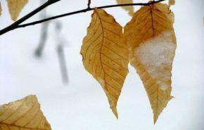 Cuidados del jardín en invierno
