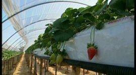 """""""Hidroponia"""", la forma de cultivar del futuro. Parte 1"""