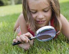 Cómo eliminar las chinches del jardín sin químicos