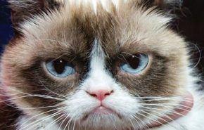 30 gatitos que te darán ganas de adoptar uno mañana mismo