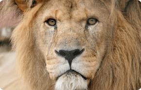 Vida nocturna, los mamíferos no pueden ocular su pasado