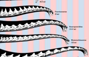 ¿Por qué los dinosaurios tenían cuellos tan largos?