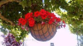 Para las plantas de interior: macetas colgantes