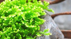 ¿Cuáles son las plantas de interior que necesitan poca luz?