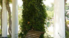 Plantas trepadoras, características generales