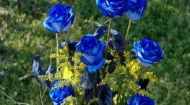 Cómo plantar Rosas Azules en el jardín