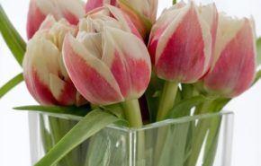 Las flores más apropiadas para cada ocasión