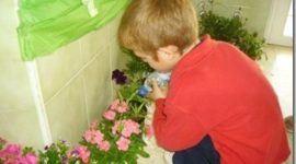 Jardineria para niños | Cuidados