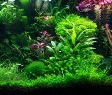 Consejos para el cuidado de plantas de acuario