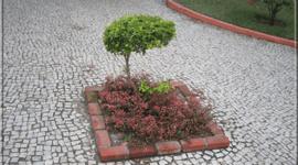 El cultivo del Bonsai