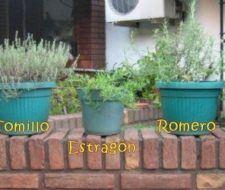 Clases de hierbas aromáticas
